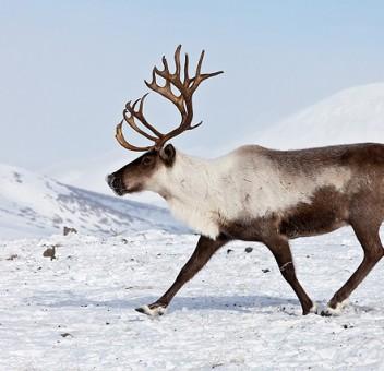 deer-pic4_zoom-1000×1000-26295